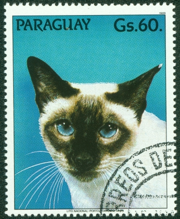 PARAGUAY - CIRCA 1989  A stamp printed by Paraguay, shows cat, circa 1989