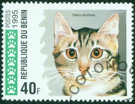 Republique du Benin - CIRCA 1995  A stamp printed in Republique du Benin shows Domestic cat, Shorthair tabby, circa 1995 Stock Photo - 15854951