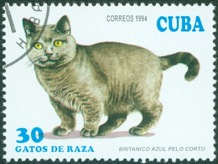 CUBA - CIRCA 1994  A stamp printed in Cuba showing British Shorthair cat, circa 1994