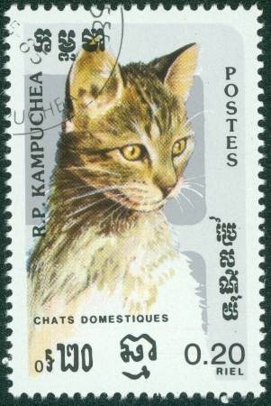 KAMPUCHEA-CIRCA 1985  A stamp printed in the Cambodia, depicts the domestic cat, circa 1985