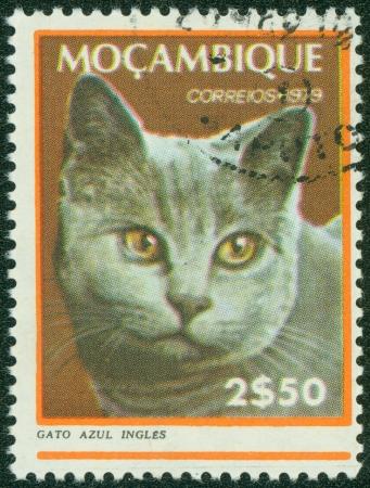 MOZAMBIQUE - CIRCA 1979  A stamp printed in Mozambique, shows Cat, circa 1979 Stock Photo - 15854954