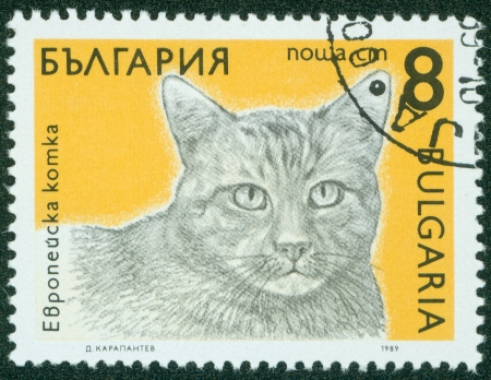 BULGARIA - CIRCA 1989  A stamp printed in BULGARIA shows a European cat, from series Breeds of cats, circa 1989
