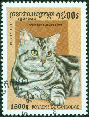 CAMBODIA - CIRCA 1997  A stamp printed in Cambodia shows Cat, circa 1997