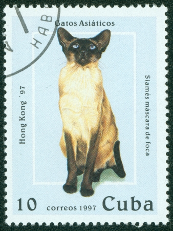 CUBA - CIRCA 1997  A stamp printed in Cuba shows cat, circa 1997 Stock Photo - 15854958