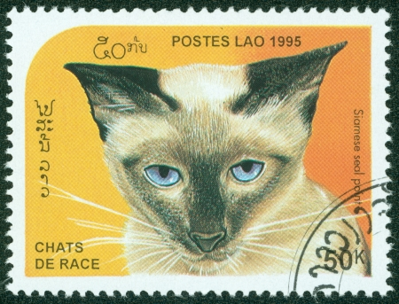 LAOS - CIRCA 1995  A stamp printed in Laos showing Siamese seal point cat, circa 1995