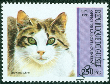 GUINEA - CIRCA 1995  A stamp printed in Guinea shows Tabby and white, circa 1995  Stock Photo - 15854909