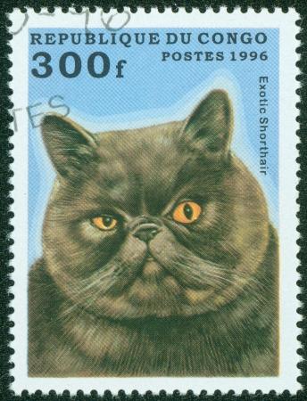 CONGO - CIRCA 1996  A stamp printed in Congo shows Exotic Shorthair cat, circa 1996