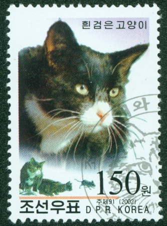 NORTH KOREA - CIRCA 2002  A stamp printed in North Korea, shows a cat, circa 2002 Stock Photo - 15854944