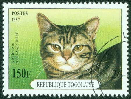 REP OF TOGO - CIRCA 1997  mail stamp printed in Togo featuring an American Shorthair cat, circa 1997 Stock Photo - 15854913