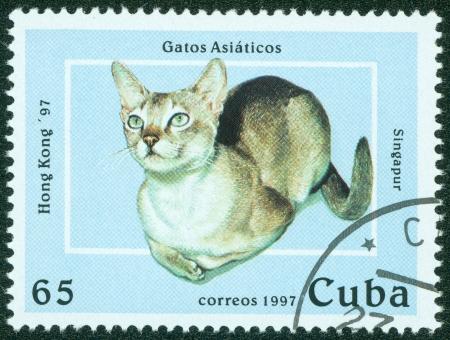 CUBA - CIRCA 1997  A stamp printed in Cuba shows cat, circa 1997 Stock Photo - 15854923