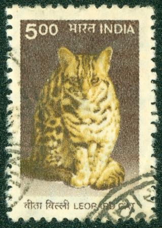 prionailurus: INDIA - CIRCA 1970  A stamp printed in India shows a Leopard cat  Prionailurus bengalensis , circa 1970 Editorial