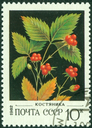 quo: USSR - CIRCA 1982  A stamp printed in USSR  Russia  shows a Wild berries with the inscription  Cranberry  ; ;quo t;, from the series  Wild berries , circa 1982