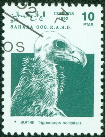 postman of the desert: SAHARA - CIRCA 1992  A stamp printed in Sahrawi Arab Democratic Republic  SADR , shows a White-headed Vulture  Trigonoceps occipitalis , circa 1992