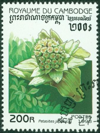 petasites: CAMBODIA - CIRCA 1998  A stamp printed in Cambodia shows flower, circa 1998 Stock Photo