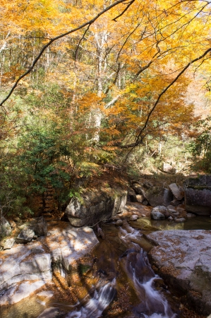 autumn,forest and stream Stock Photo - 16059500