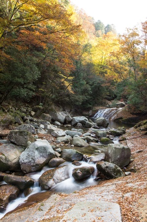 autumn,forest and stream photo