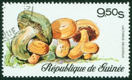 lamellar: GUINEE - CIRCA 20TH CENTURY  A stamp printed in Guinee shows Lactarius Delicious, circa 20th century