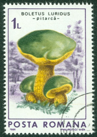 ROMANIA - CIRCA 1986  A stamp printed in Romania showing Boletus Luridus, circa 1986