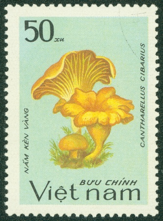 VIETNAM - CIRCA 1983  A stamp printed in Vietnam shows Cantharellus cibarius, series, circa 1983 Stock Photo - 16233155