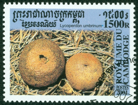 CAMBODIA - CIRCA 2001  A stamp printed in Cambodia shows the edible Umber-Brown Puffball Mushroom, Lycoperdon umbrinum, circa 2001