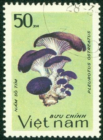 VIETNAM - CIRCA 1983  A stamp printed in Vietnam shows Pleurotus ostreatus, series, circa 1983 Stock Photo - 16233234