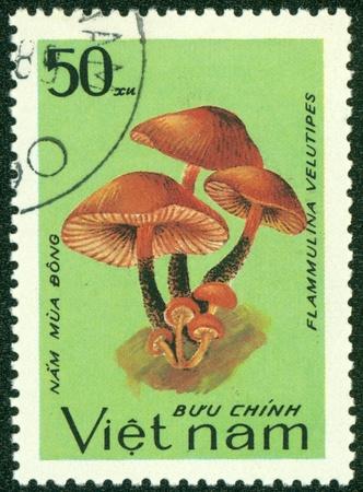 VIETNAM - CIRCA 1983  A stamp printed in Vietnam shows Flammulina velutipes, series, circa 1983 Stock Photo - 16233227