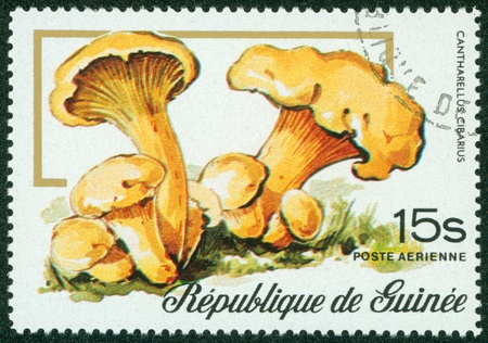 cantharellus cibarius: GUINEE - CIRCA 20TH CENTURY  A stamp printed in Guinee shows Cantharellus cibarius, circa 20th century