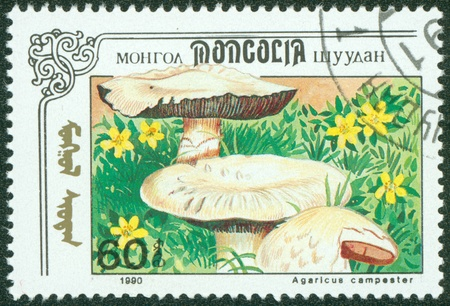 MONGOLIA - CIRCA 1990  stamp printed by Mongolia, shows mushroom, circa 1990 Stock Photo - 16233236