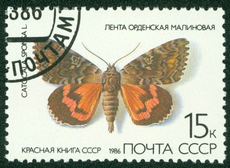 catocala: USSR - CIRCA 1986  A stamp printed in USSR, shows Butterfly Catocala sponsa , from series  Red Book USSR , circa 1986