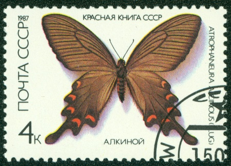 USSR - CIRCA 1987  A stamp printed in USSR, shows Butterfly Atrophaneura Alcinous , from series  Red Book USSR , circa 1987