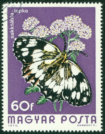 HUNGARY - CIRCA 1974  A Stamp printed in Hungary shows butterfly Marbled White - Melanargia galathea, circa 1974 Stock Photo - 16233254