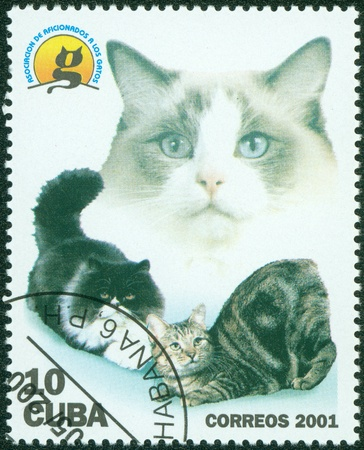 CUBA - CIRCA 2001  A stamp printed in Cuba shows cats, circa 2001 Stock Photo - 16233263