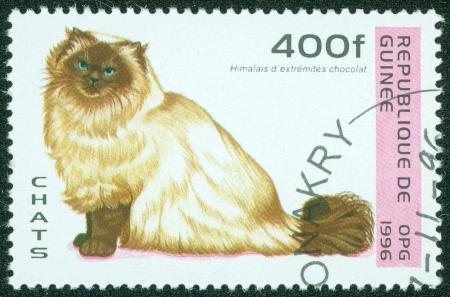 himalayan cat: GUINEA - CIRCA 1996  A stamp printed in Guinea showing Himalayan cat, circa 1996