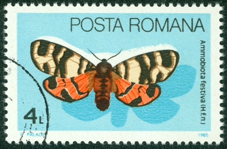 festiva: ROMANIA - CIRCA 1985  A stamp printed in Romania showing Ammobiota Festiva butterfly, circa 1985 Editorial