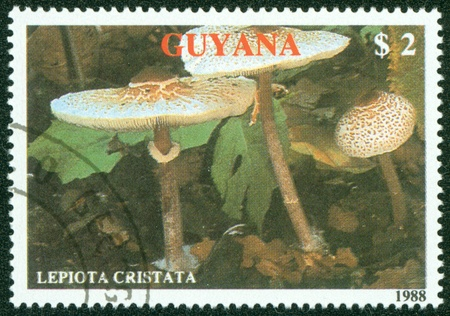 GUYANA - CIRCA 1988  A stamp printed in Guyana shows mushroom, circa 1988 Stock Photo - 16286697