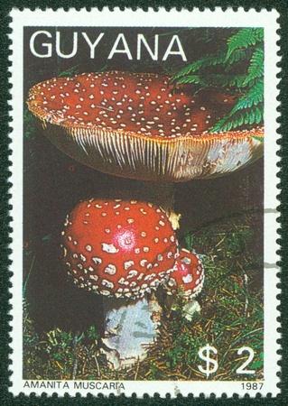 GUYANA - CIRCA 1987  A stamp printed in Guyana shows mushroom, circa 1987 Stock Photo - 16286701