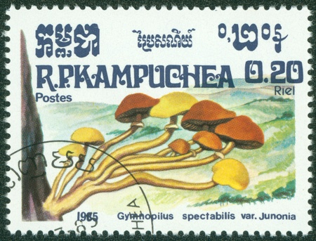CAMBODIA - CIRCA 1985  A stamp printed in Cambodia shows Mushroom, circa 1985  Stock Photo - 16302149