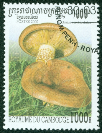 CAMBODIA - CIRCA 2000  A stamp printed in Cambodia shows Mushroom, circa 2000 Stock Photo - 16302114