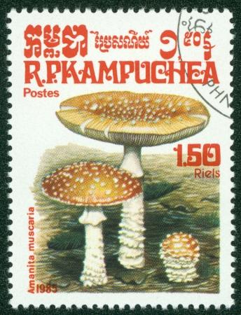 CAMBODIA - CIRCA 1985  A stamp printed in Cambodia shows Mushroom, circa 1985 Stock Photo - 16302121