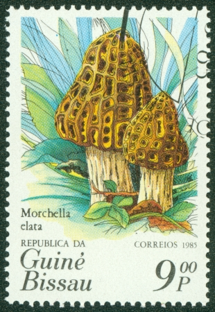 guinea bissau: GUINEA BISSAU - CIRCA 1985  A stamp printed in Guinea Bissau showing mushrooms, circa 1985 Stock Photo