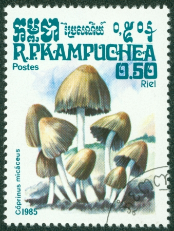 CAMBODIA - CIRCA 1985  A stamp printed in Cambodia shows Mushroom, circa 1985 Stock Photo - 16302141