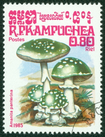 CAMBODIA - CIRCA 1985  A stamp printed in Cambodia shows Mushroom, circa 1985 Stock Photo - 16302115