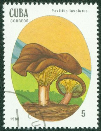 CUBA - CIRCA 1988  A stamp printed in Cuba showing Brown Roll-rim mushroom, circa 1988 Stock Photo - 16302139
