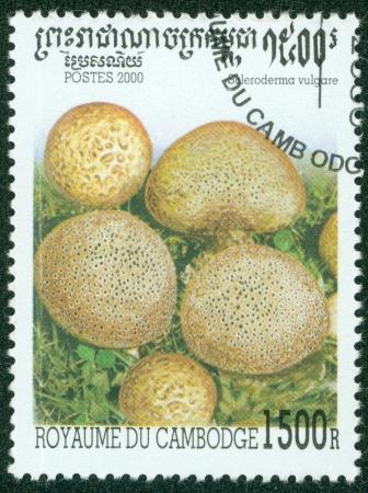 CAMBODIA - CIRCA 2000  A stamp printed in Cambodia shows Mushroom, circa 2000 Stock Photo - 16302146