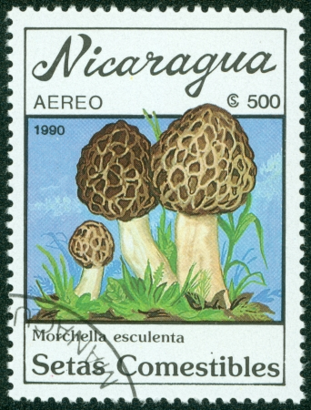 NICARAGUA - CIRCA 1990  A stamp printed in Nicaragua shows mushroom, circa 1990  Stock Photo - 16302140