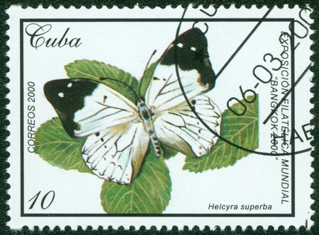 cuba butterfly: CUBA - CIRCA 2000  A Stamp printed in CUBA shows butterfly, circa 2000