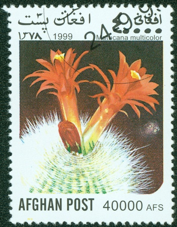 AFGHAN-CIRCA 1999  A stamp printed in the Afghan, shows cactus, circa 1999 photo