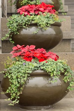 flowerpot Stock Photo - 16733618