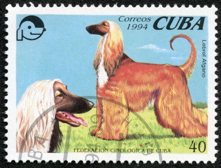 hounds: CUBA - CIRCA 1994  A stamp printed in Cuba shows two Afghan hounds, circa 1994