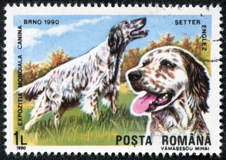 ROMANIA - CIRCA 1990  A stamp printed in Romania shows English setter, circa 1990 Stock Photo - 17199291